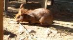 Coniglio Carotte - ()