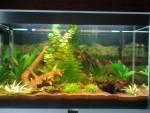 Pesce Mon aquarium - ()