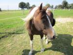 Pony Praline - ( (10 anni))