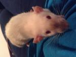Ratto Carrie - ( (Altro))